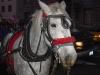 sad-horse-3.jpg
